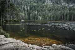 Großer Arbersee in Bavaria (mario.dobelmann) Tags: groser arbersee lake lakeview seeblick see seerosen trees bäume pond landscape landschaft nature natur scenery calm mindfulness 80d bavaria bayern canon summer sommer rocks water wasser