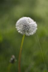 Ready for take-off (Tormod Dalen) Tags: pentax pentaxart france normandie flower nature fleur
