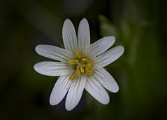P'tite fleur (Tormod Dalen) Tags: inversé inverted macro flower pentax pentaxart france normandie nature fleur