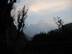 south annapurna (lamboleykalou) Tags: népal2o1o asia népal annapurna sanctuary south big mountain snow white trees morning legend