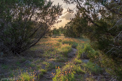 hiking with wildflowers in HDR (Jason Frels) Tags: hdr hiking nikond750 texashiking firewheels flowers hikingcentraltexas nikon outdoors spring sunset texashillcountry trails wildflowers