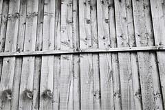 Fenced (bigalid) Tags: film 35mm olympus az300 superzoom ilford xp2 c41 bw may 2019 fence