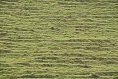 Volcanic grassy hill