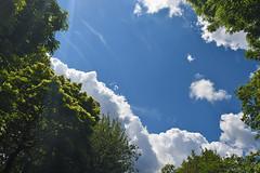 Green, White And Blue (Coquine!) Tags: christianleyk london unitedkingdom greatbritain england sky himmel batterseapark park lookingup clouds wolken trees bäume green grün blau blue azur azul white weis