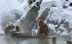 Hot Spring Bliss (chasingthelight10) Tags: photography events travel places japan yudanaka things snowmacaques snowmonkeys otherkeywords hotsprings snowmonkeypark