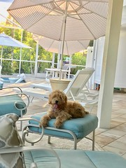 Maggie hanging out by the pool