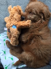 Einstein napping with his best toy