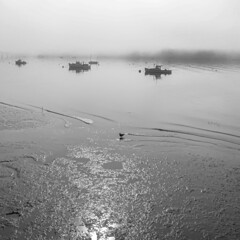 The Bird, the Boats and Low Tide in the Bay (jessicalowell20) Tags: sheepscotriver bay bird blackandwhite boats coast fog lowtide maine mist morning mud newengland northamerica summer wiscasset wiscassetbay
