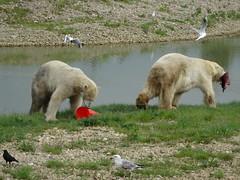 The bears reach an agreement… (LadyRaptor) Tags: