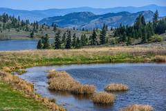 Lakes in the grasslands (Richard McGuire) Tags: bc britishcolumbia osoyoos southokanagan southokanagangrassland landscape