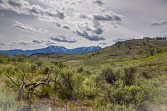 Grasslands in May (Richard McGuire) Tags: bc britishcolumbia osoyoos southokanagan southokanagangrassland landscape