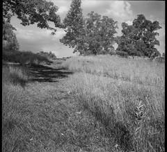 pathway, hillside, grasses, trees, cast shadow, Biltmore Estate, Asheville, NC, Bencini Koroll, Ilford FP4+, HC-110 developer, 5.24.19 (steve aimone) Tags: pathway grasses trees castshadow biltmore biltmoreestate asheville northcarolina bencini bencinikoroll ilfordfp4 hc110developer mediumformat 6x6 blackandwhite monochrome monochromatic 120 120film film landscape