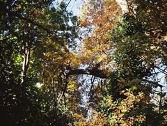 Autumn (Matthew Paul Argall) Tags: jcpenneyelectronicstrobepocketcamera fixedfocus 110 110film subminiaturefilm lomographyfilm 200isofilm autumn