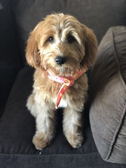 Allie's sweet girl Riley!
