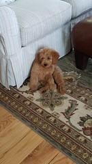 Annie's sweet girl Abbie!