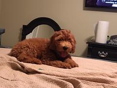 Allie's sweet boy Houdni