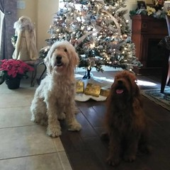 Candy's Ruby with her sister Bella