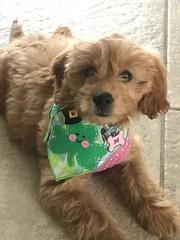 Dakota's adorable Maggie!