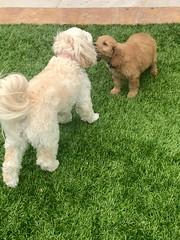 Ella's sweet Charlie