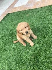 Ella's sweet boy Charlie