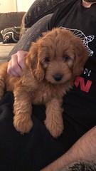 Darby's sweet little Sophie!