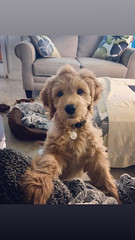Gretta's sweet boy Teddy