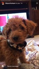 Gypsy's sweet girl Piper!