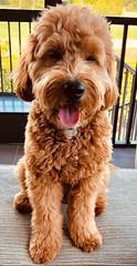 Kasey's handsome Oliver!