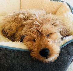 Kasey's sleepy boy Oliver