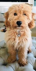 Kasey's adorable Oliver