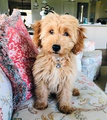 Kasey's adorable Oliver!