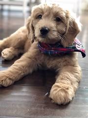 Penny II's sweet Ollie!
