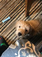 Penny II's adorable Wookie