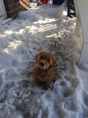 Mandi's adorable Gigi!