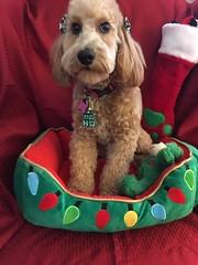 Roxie's Jo's beautiful Dolce!