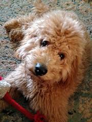 Penny's sweet Ella