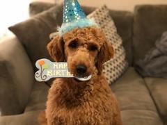 Polly's birthday boy Ollie!