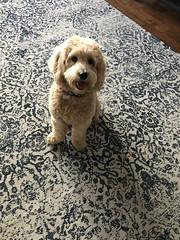 Roxie's adorable Parker!