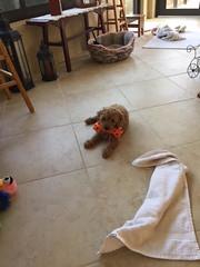 Penny's sweet baby girl