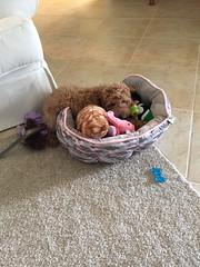 Penny's sweet baby girl!