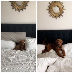 Polly's adoarable Ollie!