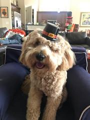 Roxie's sweet pilgrim