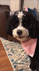 Toffee's sweet girl Minnie!