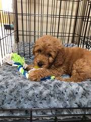 Sophie's adorable Yogi!