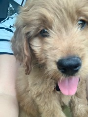Sophie's adorable Bert!