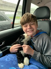 Toffee's Buddy on his way home!