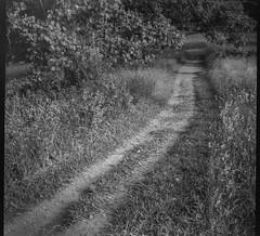 pathway, grasses, branches, leaves, Biltmore Estate, Asheville, NC, Bencini Koroll, Ilford FP4+, HC-110 developer, 5.24.19 (steve aimone) Tags: pathway grasses branches leaves biltmoreestate biltmore asheville northcarolina bencini bencinikoroll ilfordfp4 hc110developer 120 120film film mediumformat 6x6 monochrome monochromatic blackandwhite