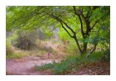Path Less Traveled (Christina's World!) Tags: landscape textures trees path painterlygreen 5881 topaz sdbg garden botanicgarden california sandiego purpleflowers kurtpeiser