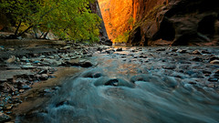 Nascent Autumn in the Narrows (Kevin Benedict Photography) Tags: zion nationalpark narrows springdale utah slot canyon nikon nikkor landscape photobenedict autumn fall virginriver stream river gorge trees beautiful color rocks sandstone eroded erosion longexposure colorful tree hike water travel southwest