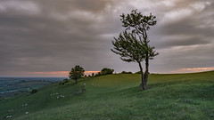 lone tree with re photography a7iii (gaztotalmods) Tags: